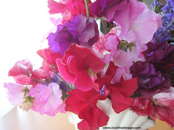 Sweetpea Bouquet