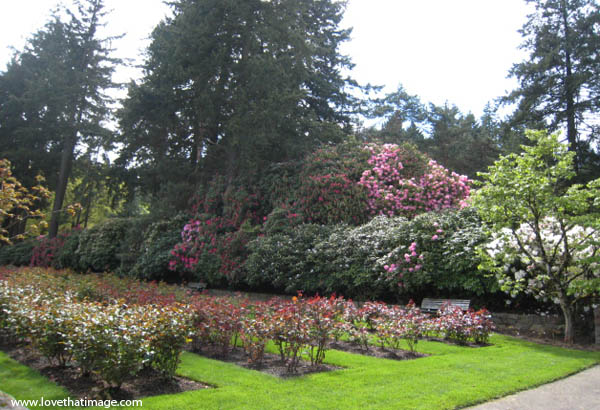 Portland rose garden and flowering trees in spring love for Portland spring home and garden show