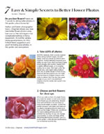 7 Secrets to Better Flower Photos