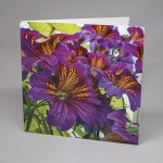 Salpiglossis or Painted Tongue